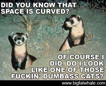 Space Ferret